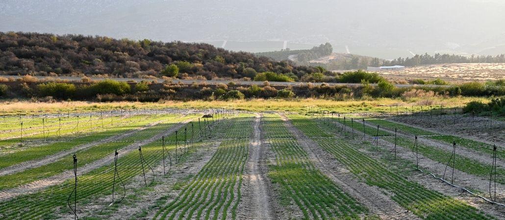 carmien-news-from-the-farm-blog-banner